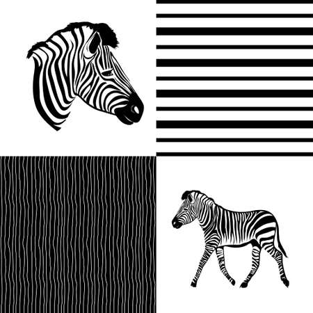 Seamless animal pattern skin fur vector zebra pack on a white background. Vector, illustration