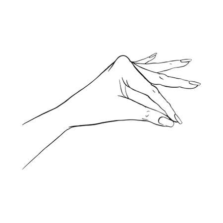 Hand gestures outline vector illustration. Women's girl's female palm drawing. Empty hand showing, beautiful woman hand holding isolated on white background. 向量圖像