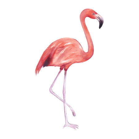 Vector illustration of a pink flamingo in watercolor on a white background