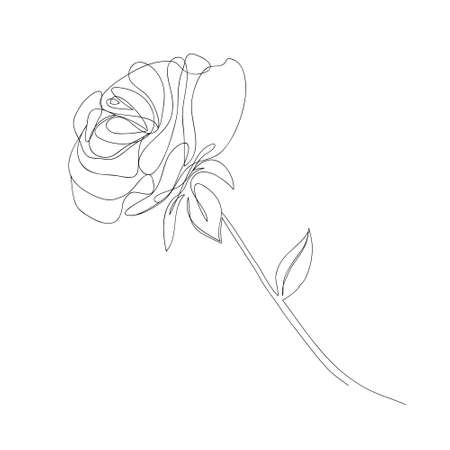 Continuous single-line drawing of a rose. Black and white vector illustration of a flower.  postcard, banner, poster, flyer concept