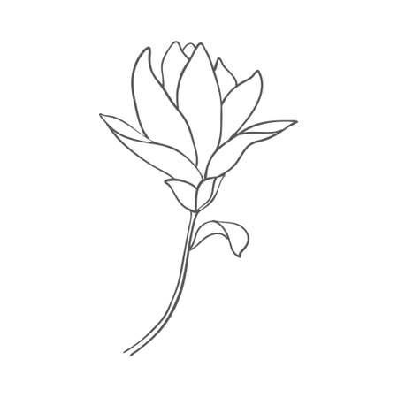 Sketch of graphic hand-drawn magnolia flower on a white background. Vector illustration.