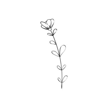 Sketch a leaf branch by hand on an isolated background. Vector, illustration