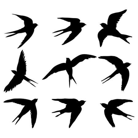 A set of black isolated vector silhouettes of a swallow, a bird on a white background. Vector illustration.