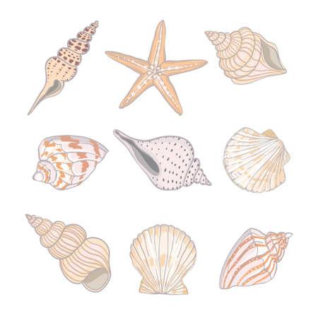 A set of different beautiful seashells on a white background. Realistic hand-drawn seashells. Vector, Illustration. Standard-Bild