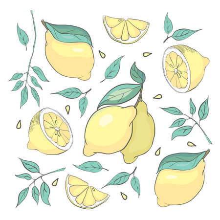 set of isolated sketched lemons and leaves for posters, logos, product packaging design Illustration