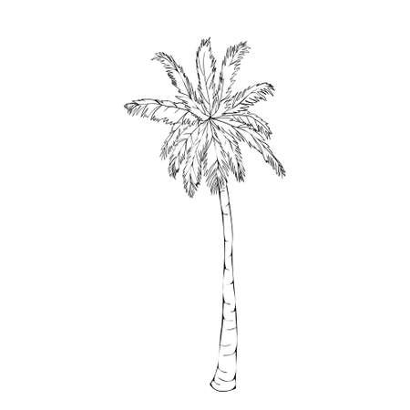 Coconut palm tree natural icon isolated on a white background, art logo design