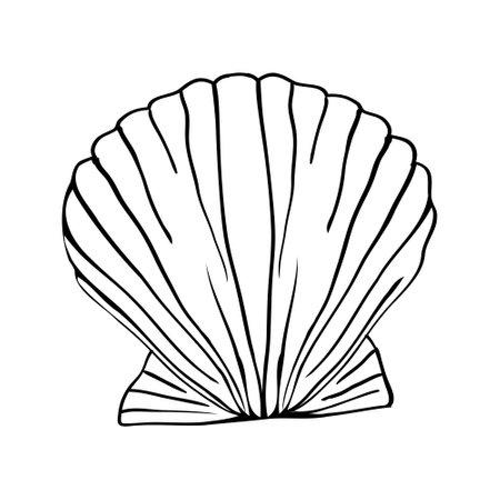 Vector illustration of a hand-drawn scribble from a seashell. Иллюстрация