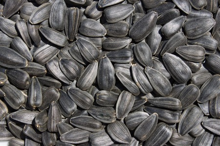 uses: organic sunflower seed for background uses