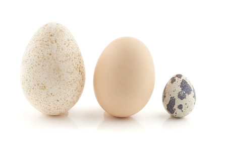 egg box: A hen egg, turkey egg and a quail egg. Still Life photography