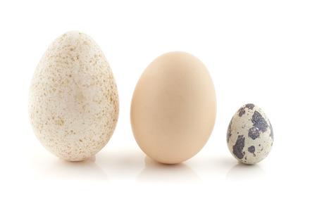 Un huevo de gallina, huevo de pavo y un huevo de codorniz. Vida Todavía la fotografía Foto de archivo