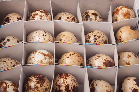 huevos de codorniz: huevos de codorniz, fotograma completo en caja