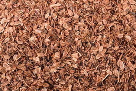 finocchio: Secchi semi di finocchio organici come sfondo Archivio Fotografico
