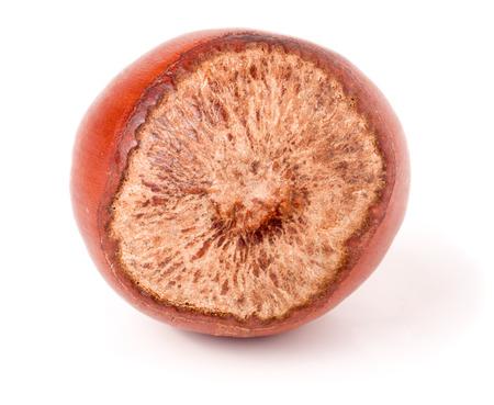 cobnut: One hazelnut isolated on white background macro.
