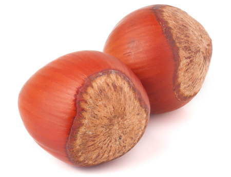 cobnut: Two hazelnuts isolated on white background close-up macro.