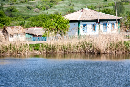 bulrushes: rural landscape with a pond, willows, reeds and old house.