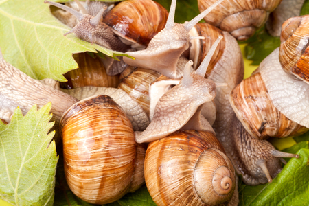 cute animal: some snails crawling on a white background closeup.
