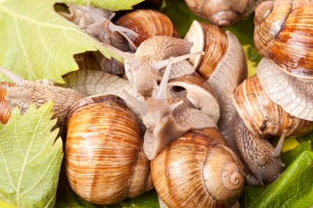 land slide: some snails crawling on a white background closeup.
