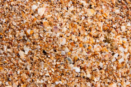 coquina: sand of small shells on the coast as background close-up.