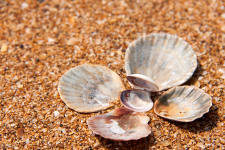 seashells in the sand on the seashore.