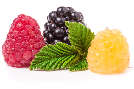 brambleberry: raspberries and blackberries with leaf isolated on white background.