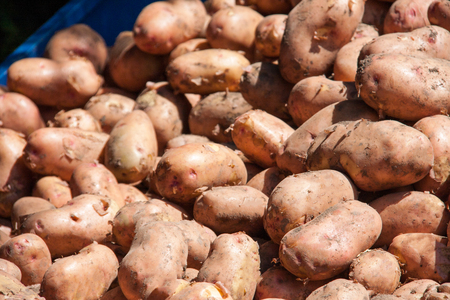 potatoes on the counter market as background. Stock Photo
