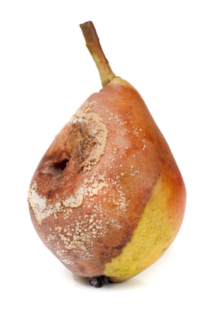 rotten pear isolated on a white background closeup. Stock Photo