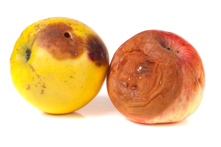 putrefy: two rotten apple isolated on a white background.