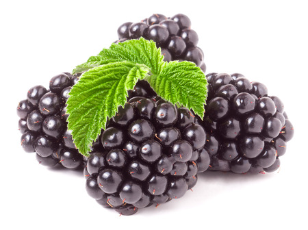 pile of leaves: pile of blackberry with leaves isolated on white background.