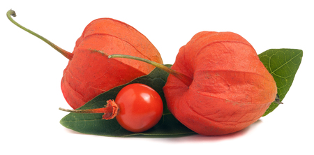 two closed and one open hask tomatoes with leaf isolated on white background. Stock Photo