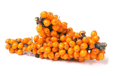 two sprigs of sea-buckthorn berries isolated on a white background.