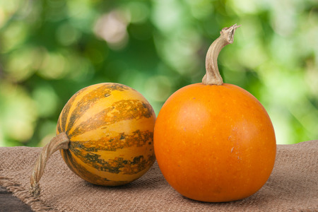 Orange and striped decorative pumpkins on a wooden table with sackcloth and blurred garden background.