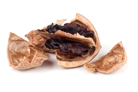 putrefy: spoiled walnut isolated on a white background closeup. Stock Photo