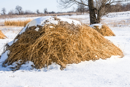 Haystacks in the snow at winter in the village