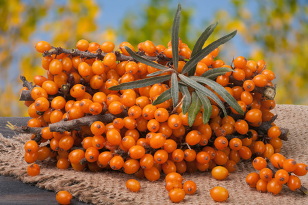 argousier: Sea buckthorn branch on a wooden table with blurred garden background. Banque d'images