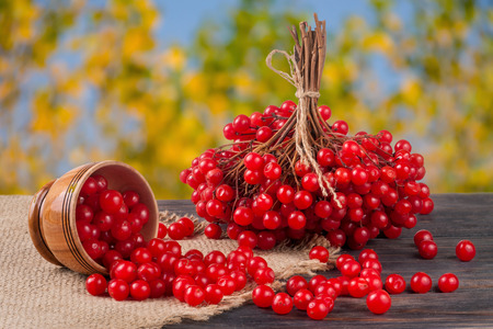 palle di neve: ripe red viburnum berries in a wooden bowl on table with blurred garden background