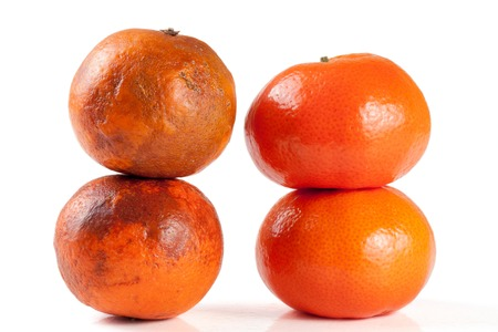 uneatable: fresh and damaged tangerine isolated on white background