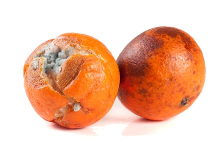 one moldy tangerine isolated on white background.