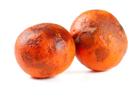 uneatable: two damaged tangerines isolated on white background
