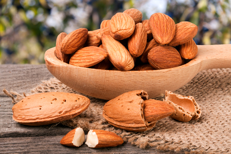 bagging: heap of peeled almonds in a wooden spoon on table blurred garden background