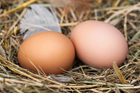 gamme de produit: Two chicken eggs lying in the nest of straw.