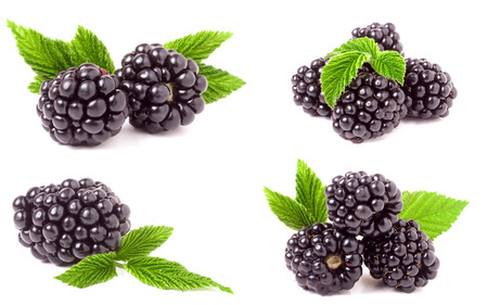 blackberry with leaves isolated on white background. Set or collection Foto de archivo