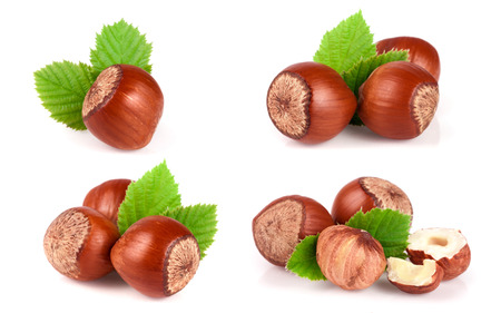 Hazelnuts with a leaf isolated on white background. Set or collection