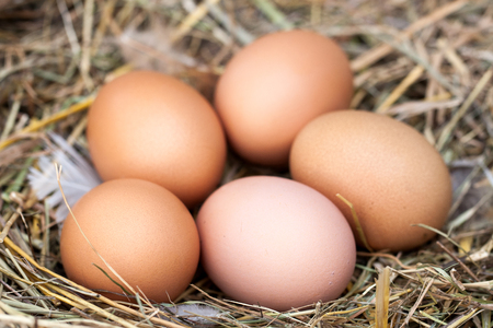 five chicken eggs lying in the nest of straw Stock Photo