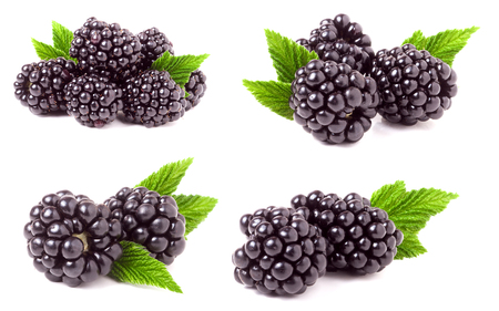 blackberry with leaves isolated on white background. Set or collection Stock Photo