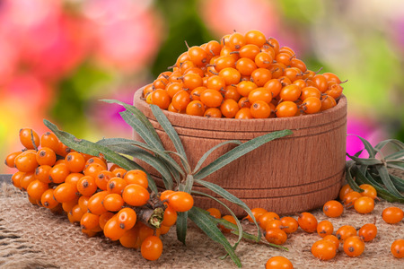 Sea-buckthorn berries in a wooden bowl on table with blurred garden background