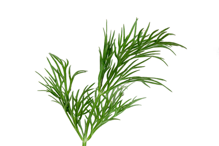 Fresh green dill isolated on white background