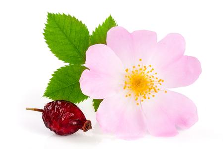 ローズヒップの花は、白い背景で隔離の葉とベリー