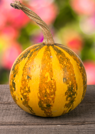 Small decorative orange pumpkin ion a wooden board with blurred garden background.