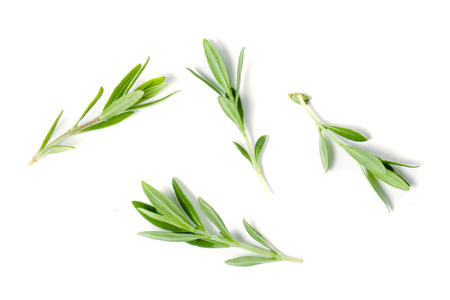 Sprig of fresh thyme isolated on a white background Stock Photo