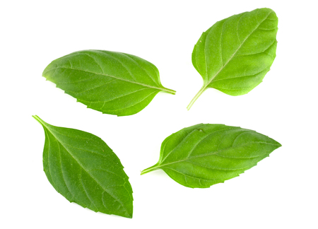 basil herb leaves isolated on white background